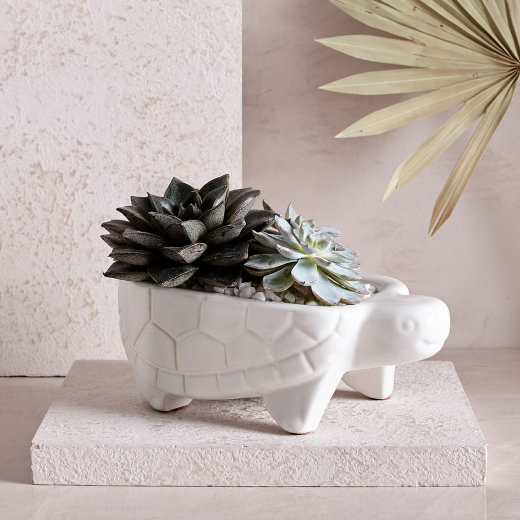 westelm-ceramic-turtle-planter